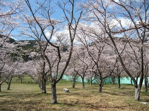 2015田の原公園