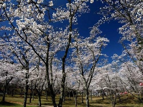 2015萩尾公園